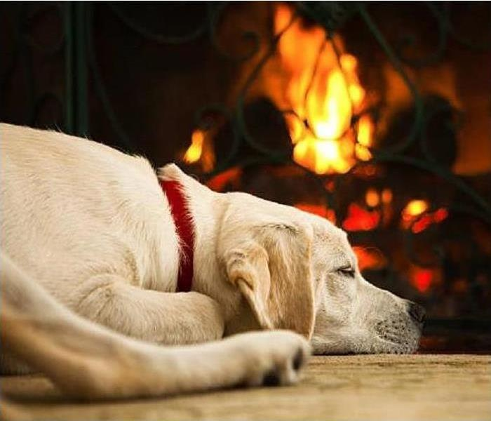 Dog sleeping next to a fireplace